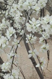 山桃花开踏春来……