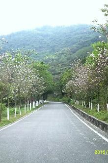 3.27黄山鲁森林公园踏青摄影请报名