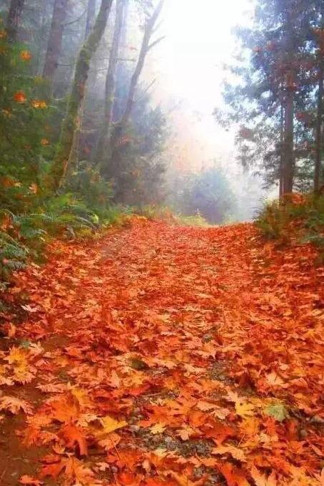 10月24出发孟屯河谷两日红叶之旅