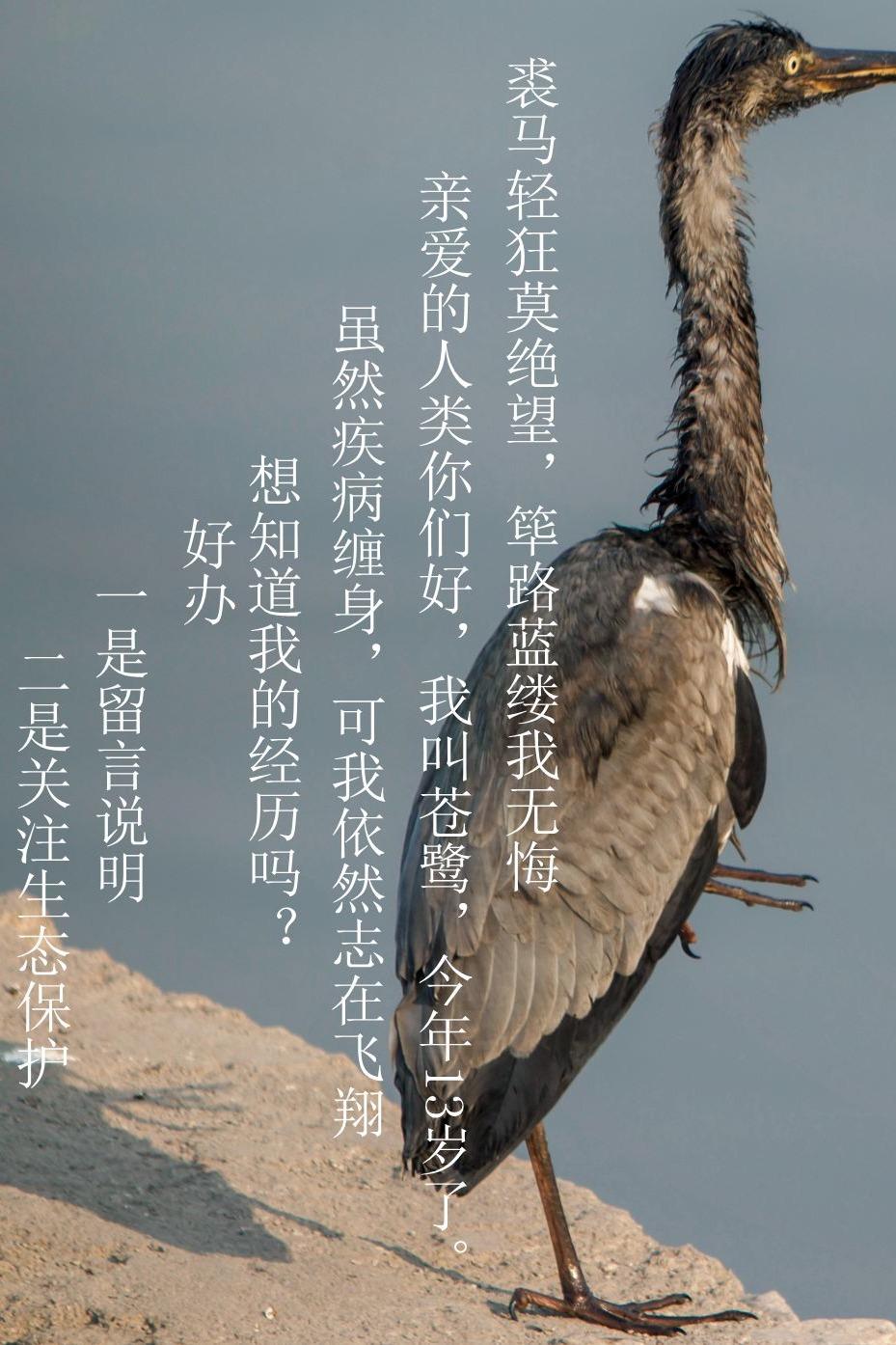 """山西省爱鸟周——临汾亲近自然""""爱鸟""""行动"""