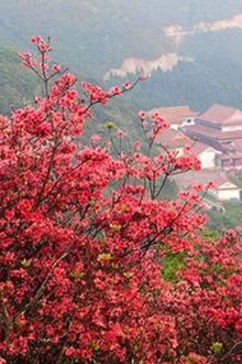 永州阳明山森林公园一日游