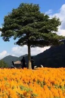 """10.30周日 从化石门公园""""七彩天池""""花海盛宴"""