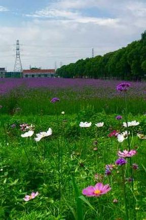 2016年6月10日(周五)荪湖村环线赏花爬山活动