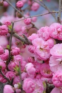 4月25号走进民和桃花节、赏花摄影徒步召集中……