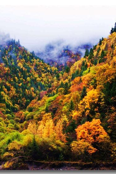 【黑水彩林两日游】八十里彩林长廊层林尽染