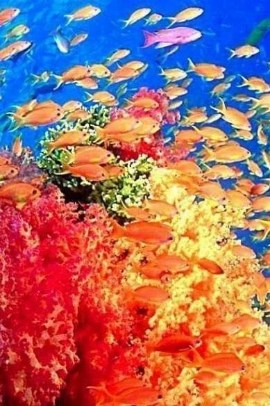 【慧游帮】金沙湾  集发生态观光园  新澳海底世界2日游