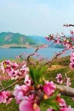 4月25-26日丹东河口看桃花赏边境风情