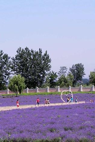 6月1日薰衣草庄园、沙河水街儿童节亲子一日游