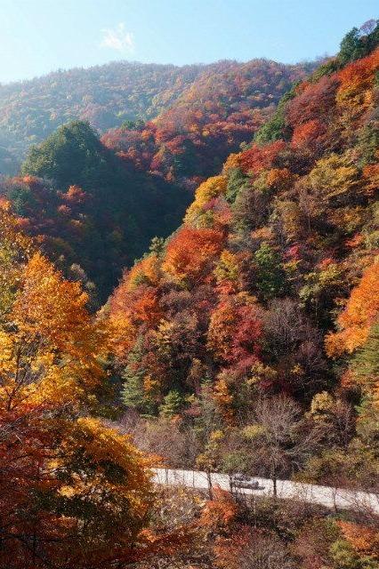 黄柏塬看满山红叶摄影2日游
