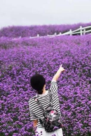 5月14日来宾忻城薰衣草庄园花海一日游