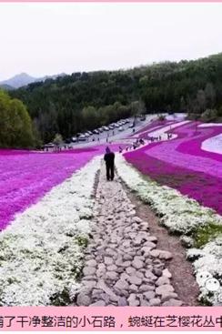 江源发车5月28日(周六)通化横道花海一日游活动