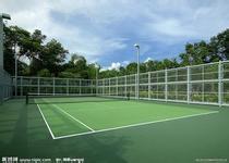 喜欢网球的一起锻炼
