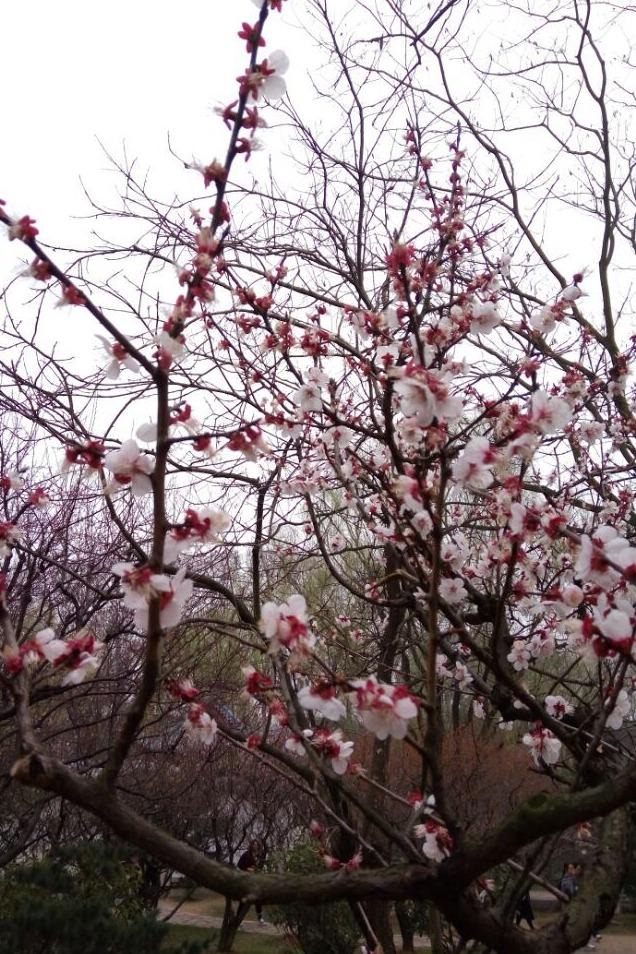 南京红山森林动物园、梅花山一日游
