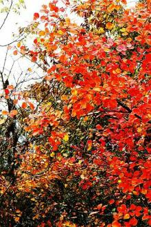 周日茨沟赏红叶