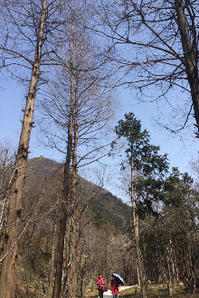 5月2日轻松假日漫步七尖峰林场