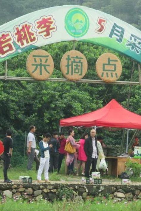 【本周末】免门票送五斤李子(山重采摘节)