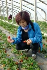 4月4日大珠山赏花,摘草莓,少海湿地踏青
