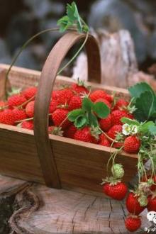 3月21日,让我们一起去摘草莓吧!