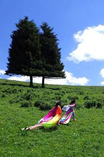 7月2日风之旅户外陪您去东白杨沟赏美景避暑采蘑菇