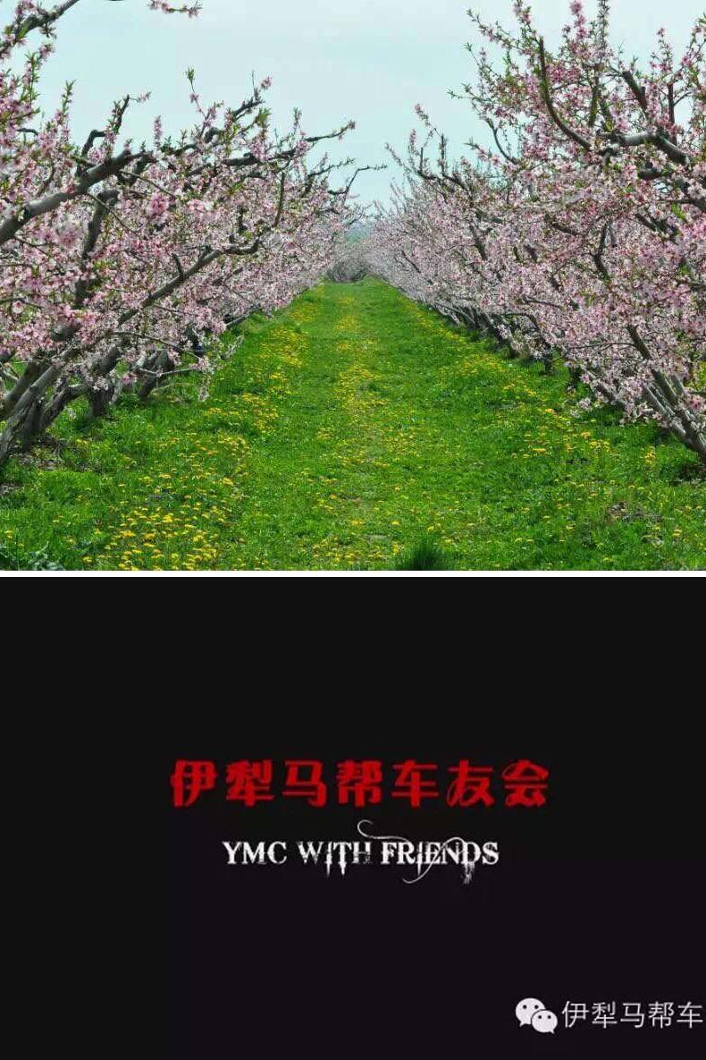 【伊犁马帮】4月26日桃花节一游