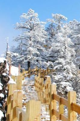 68/人 西岭雪山徒步+赏雪一日游