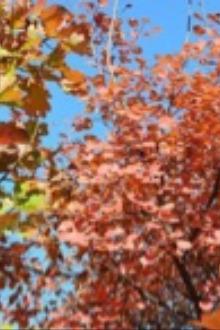 10月17日  周六  坡峰岭红叶观赏登山行摄休闲登山活动