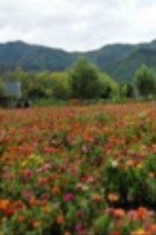 9月19日  周六   延庆百里画廊、四季花海一日休闲游