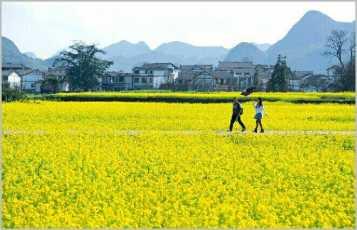 3月13-15日玩透中国最美乡村-婺源油菜花、黄花世界