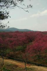 3月6日星期天,十里莲江一日游
