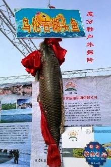 度分秒户外探险2015年1月17-18日福海观冬捕节吃野鱼宴
