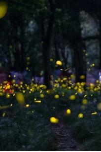 远行南京站夜爬紫金山+摄影活动