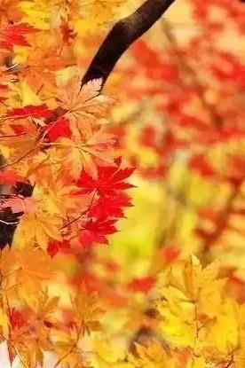 12月19日【红枫】石门森林公园赏红叶摄影之旅!