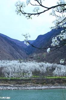 踏青赏梨花感受春的美丽