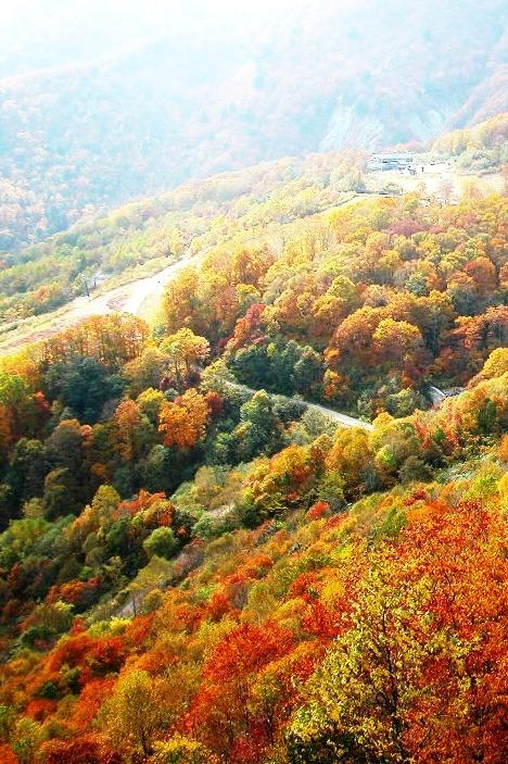 11月12日,周六,香山——八大处休闲游。