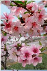 3月13日,我们一起龙泉看桃花一起踏春看桃花