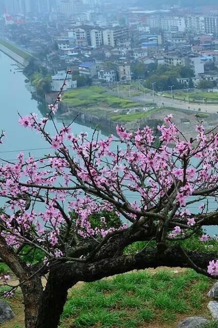 开心户外迈步队3月28日【周六】看桃花朵朵开活动AA相约