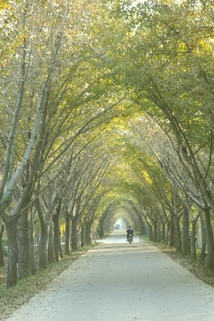10月31日周六邳州艾山4A风景区与赏金色银杏一日游含餐