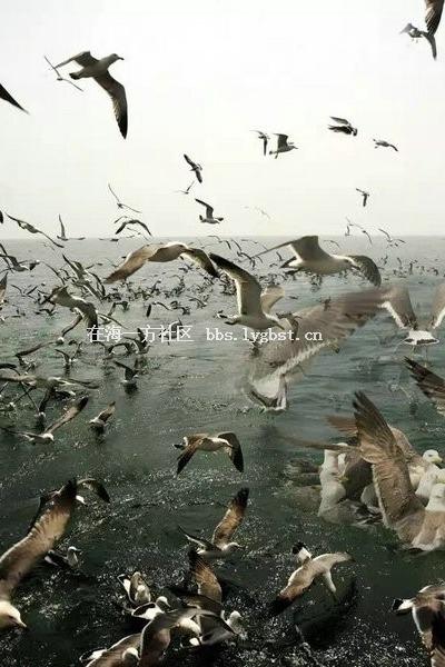 6月25-26放长岛看海鸥.黄金矿探险2日游
