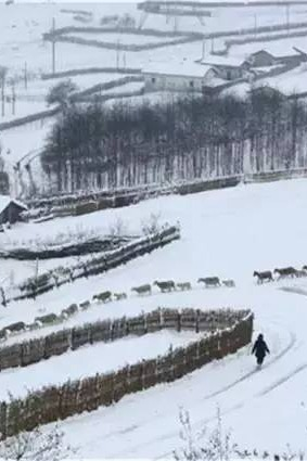 四川版东北雪乡~冶勒湖
