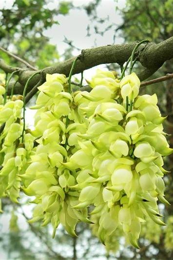 高州仙人洞登山赏禾雀花、杜鹃花、梯田一天游