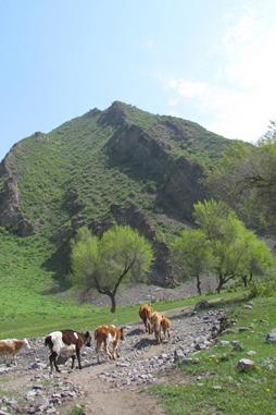 4月18日带您大小马圈10公里穿越,花开草绿之际邂逅野菜