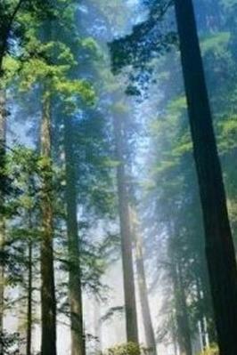 8月30日周日早上徒步三门江森林公园吸氧、乱逛