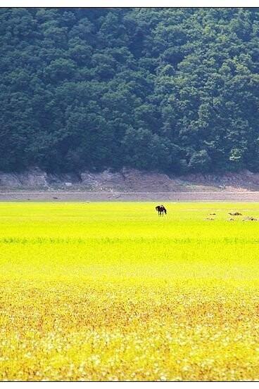5月31日玉龙湖风景区、水没地大草甸休闲照相游玩