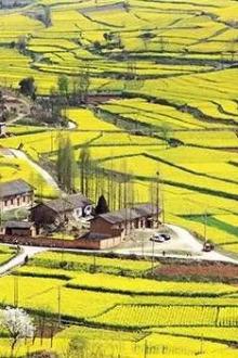 汉中城固柳林镇赏油菜花洋县观朱鹗两日游