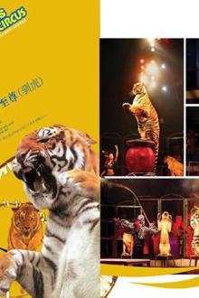 2月14情人节西湖公园东门皇家国际马戏团环球巡演