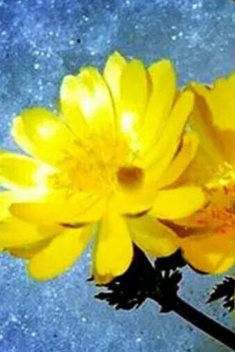 3月27日基地赏最美春色、春游双凤山寻找冰凌花