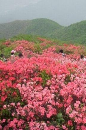 皖南原生态白石崖-黑洞瀑布群赏花穿越活动