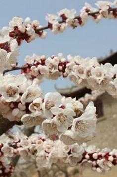 阳春三月观桃花_柳隐山