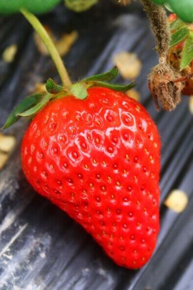 溧水生态园赏玉兰花林+烧烤+傅家边摘草莓