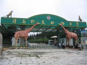 济南野生动物园亲子一日游开始了